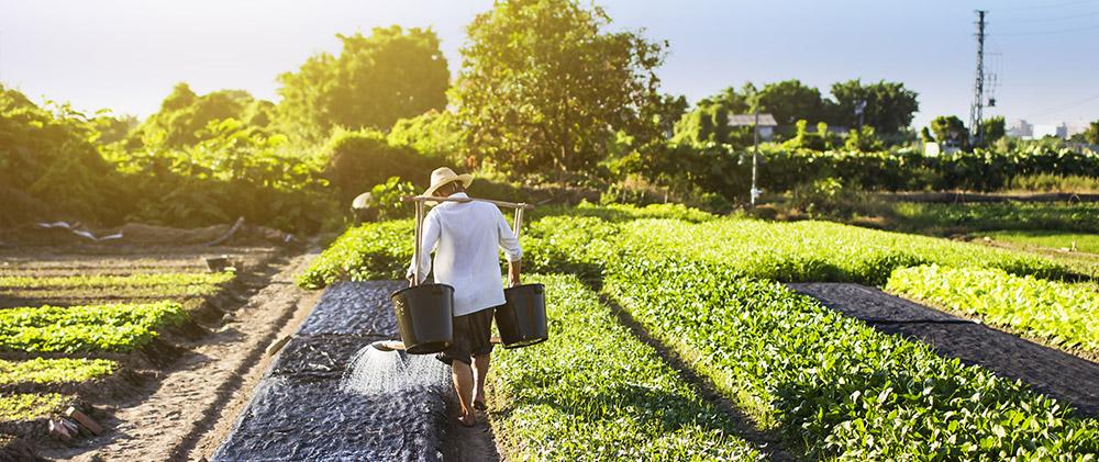 Jak uzyskać zawód Rolnika?